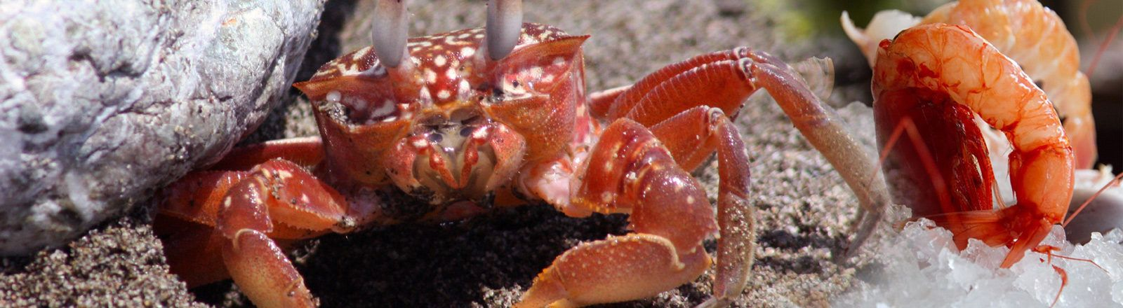 Хитозан - добавка за отслабване дар от морето