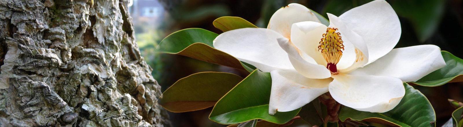 Relora - Природна добавка за отслабване, тревожност, стрес и безсъние