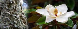 Relora е Природна добавка за отслабване