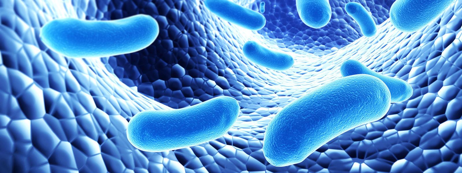 Пробиотици видове. Кой е най качествения пробиотик за възрастни и деца